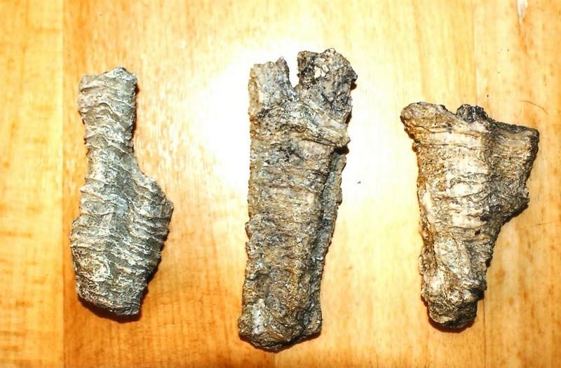κοράλλια Γρεβενά 30 εκατ. ετών
