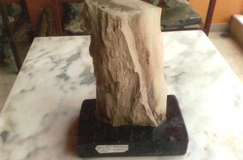 Απολιθωμένο ξύλο εποχής Μειόκαινου Έβρος