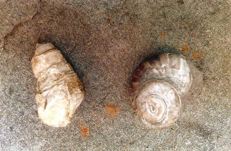 Κογχύλι-Σαλιγκάρι Δότσικο Γρεβενών